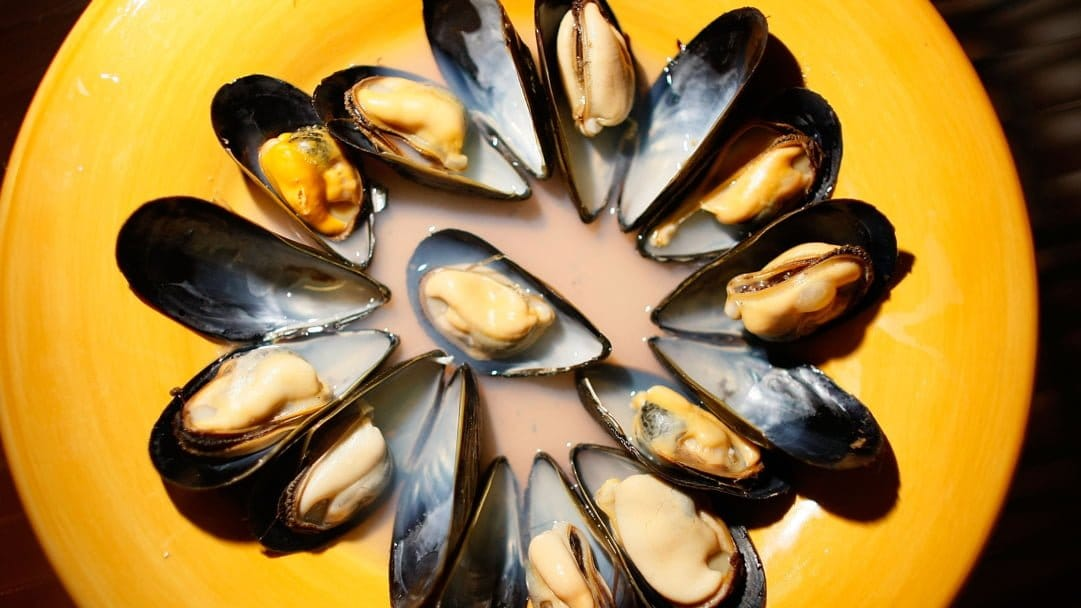 Opioids found in Puget Sound mussels