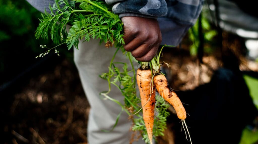 Black Farmer thegrio.com