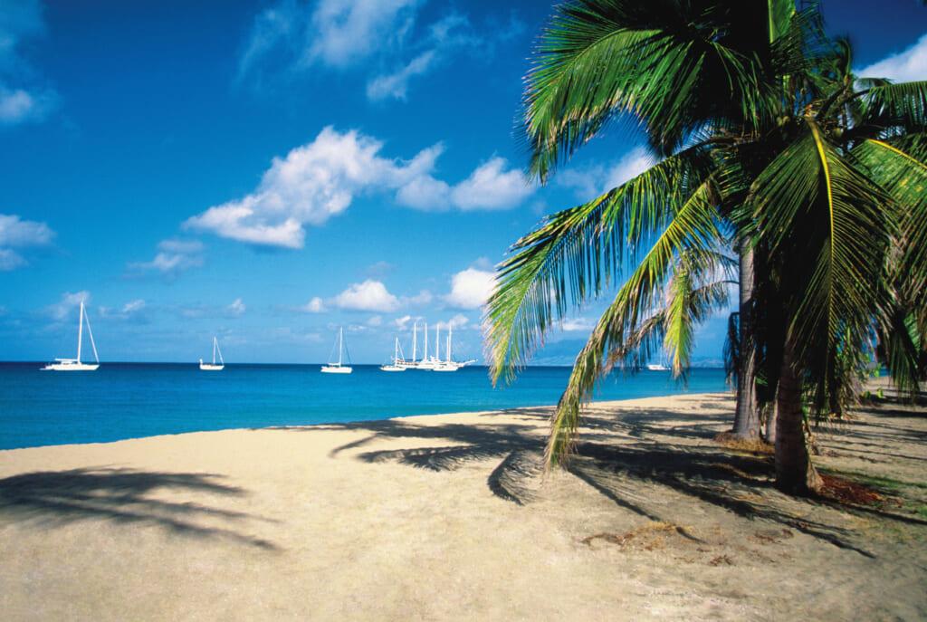 Caribbean thegrio.com